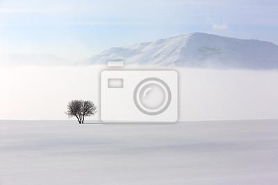 Samotne drzewo w miękkiej, spokojnej i śnieżną zimą środowiska.