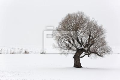 Samotne drzewo w miękkim, spokojnym i śnieżnej środowiska w czasie zimy.