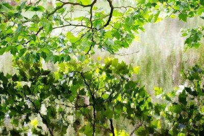 Fototapeta scena natura. Wiosna drzewa odzwierciedlone w wodzie.