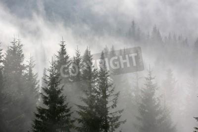 Fototapeta Scena z lasu sosnowego w porannej mgły
