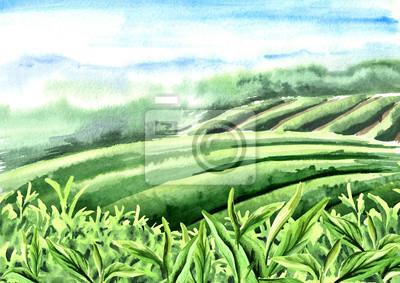 Fototapeta Sceneria plantacji herbaty. Liście herbaty. Ręcznie rysowane akwarela ilustracja