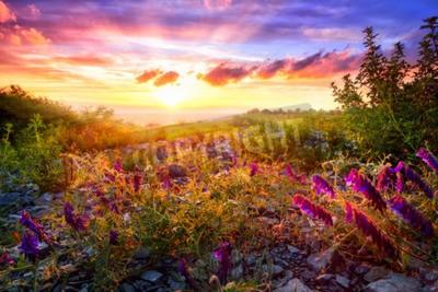 Fototapeta Scenic krajobraz zachodu słońca z mieszanych roślinności w ciepłym słońcu i kolorowe niebo w tle