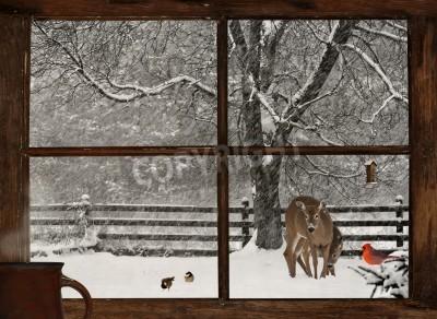 Fototapeta Scenic widok matki i dziecka jelenia, jasnoczerwony kardynała i dwóch ślicznych chickadees w śnieżycy, widziana przez okno domu gospodarstwa grunge z filiżanką parującej kawy na parapecie