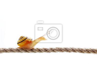 Schnecke auf Seil