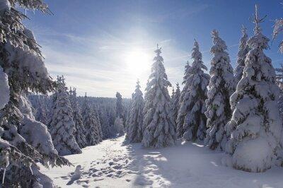Fototapeta Schneebedeckt