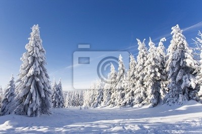 Fototapeta schöner Wintertag