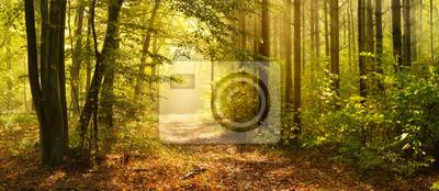 Fototapeta Ścieżka przez Zaczarowany Las jesienią, poranna mgła oświetlona przez światło słoneczne