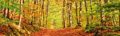 Fototapeta Ścieżka w lesie w słoneczny dzień jesieni, panorama