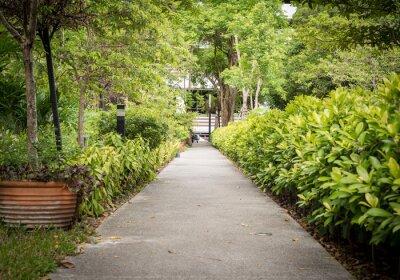Fototapeta Ścieżka w ogrodzie, krajobraz