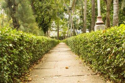 Fototapeta Ścieżka w parku