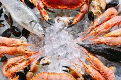 Fototapeta Seafood on ice. Crabs, sturgeon, shellfish, shrimp, Rapana, Dorado, on white ice.