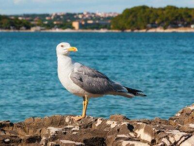 Fototapeta Seagull siedzi na skale, Istria, Chorwacja