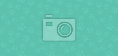 Fototapeta Seamless pattern.Traces from paws cats,dogs, household Pets.Nice vector illustration.Spectacular pastel colors.Design of websites,postcards,signs,web pages, pet stores.Vector illustration.
