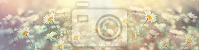 Fototapeta Selective and soft focus on daisy flower in meadow, beautiful nature in spring