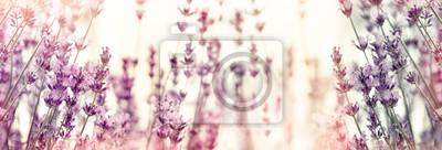 Fototapeta Selective and soft focus on lavender flowers, lavender flower in flower garden