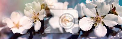 Fototapeta Selektywne focus na płatkach kwiatów i pręcików - piękne kwitnące drzewa owocowe na wiosnę