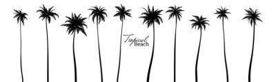 Fototapeta Set of black silhouettes of palm trees. Vector illustration