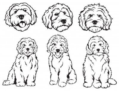 Fototapeta Set of  dog breeds Goldendoodle. Collection of vector portraits of Goldendoodle dogs. Print for clothes. Black and white drawing illustration of a fluffy dog. Tattoo Grodl.