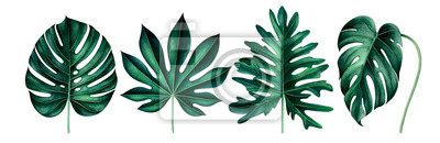 Set of exotic tropical leaves isolated on white. Watercolor illustration.
