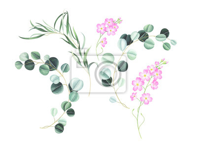 Set of pink flowers and eucalyptus isolated on white. Watercolor illustration.