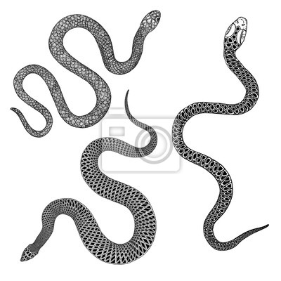 Fototapeta Set of snakes drawing illustration. Black serpent isolated on a white background tattoo design. Venomous reptile, drawn witchcraft, voodoo magic attribute for Halloween.  Vector.