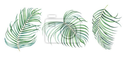 Set of tropical palm branches isolated on white. Watercolor illustration.