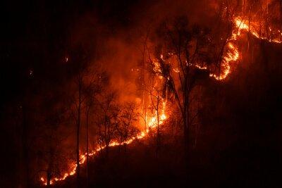 Fototapeta Several of Forest trees burned during the dry season.