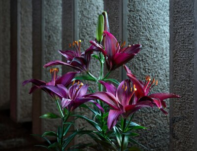 Fototapeta Sfondo con fiori rossi