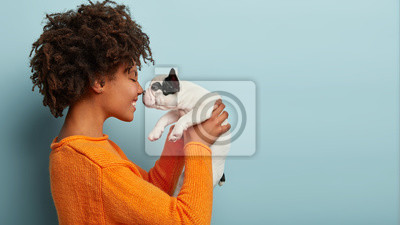 Fototapeta Sideways shot of pleased charming young woman has dark skin, curly hairstyle, touches noses with favourite dog, plays with french bulldog, dressed in orange jumper, isolated over blue background