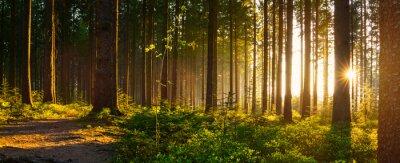 Fototapeta Silent Forest na wiosnę z pięknymi jasnymi promieniami słońca