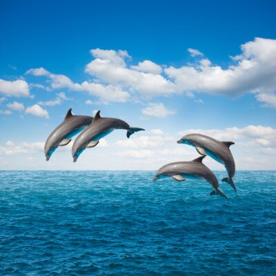 Fototapeta skaczących delfinów paczka