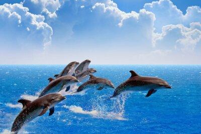 Fototapeta Skoki delfinów