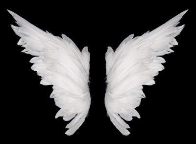 Fototapeta skrzydełka