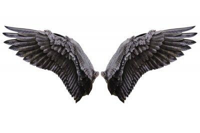 Fototapeta Skrzydła anielskie, czarne skrzydło