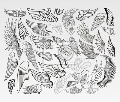 Fototapeta Skrzydła ptaków
