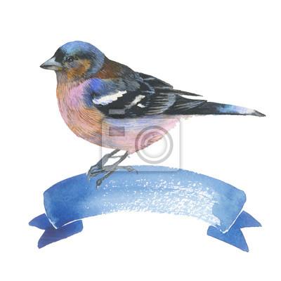 Sky ptak wróbel w dzikiej przyrody według stylu akwareli izolowane. Dzika wolność, ptak z latające skrzydło. Aquarelle ptaków mogą być wykorzystane do tła, tekstury, wzór, ramki, obramowania lub tatua