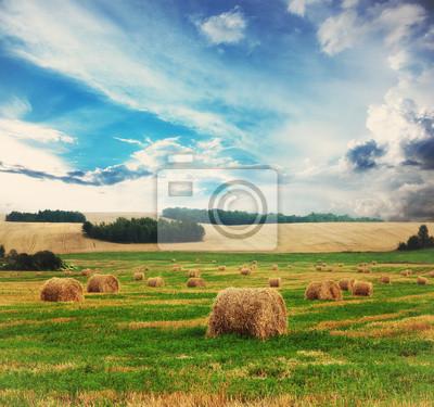 słabe pole pszenicy