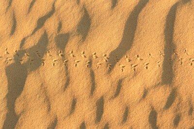 Ślady zwierząt na piasku