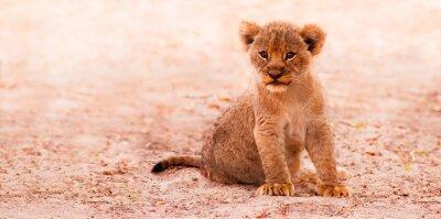 Fototapeta Słodkie Lion Cub