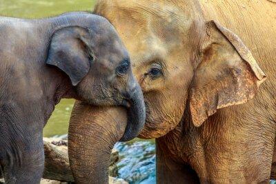 Fototapeta słoń i słoń dziecko