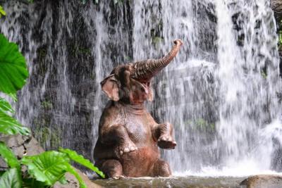 Fototapeta Słoń jest kąpiel przy wodospadzie