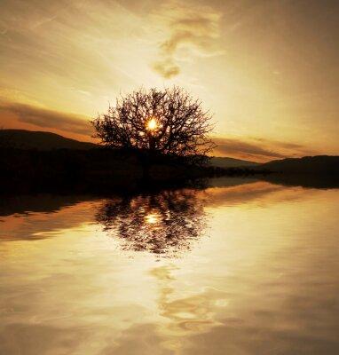 Fototapeta słońca sceny