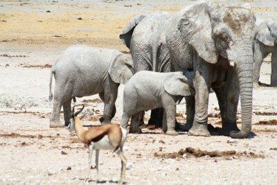 Fototapeta Słonie na oczko wodne