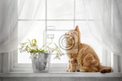 Fototapeta Small red tabby kitten sitting on the window on a sunny day