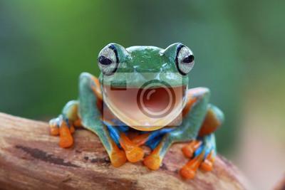 Fototapeta Śmiej Frog