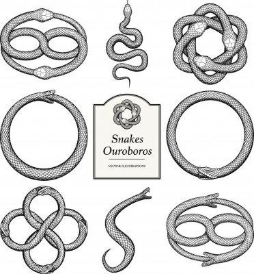 Fototapeta Snake and Ouroboros Illustrations in vintage style