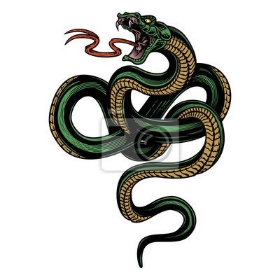 Fototapeta Snake. Colorful hand drawn vector illustration of snake in engraving technique isolated on white background.  Poster, t-shirt print, cover.