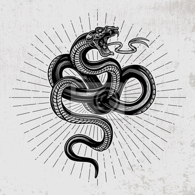 Fototapeta Snake poster. Hand drawn vector illustration in engraving technique with star rays on grunge background.