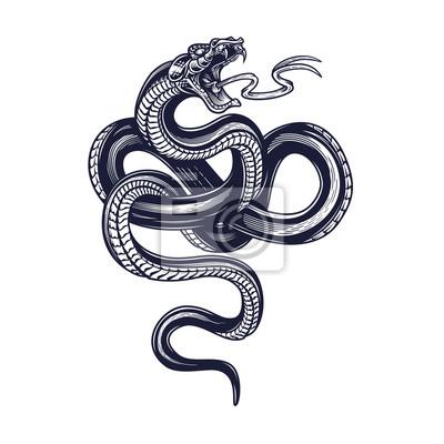 Fototapeta Snake. Vector hand drawn illustration of snake in engraving technique isolated on white background. Occult poster, t-shirt print, cover.