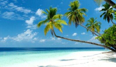 Fototapeta śnić plaża